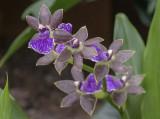 'Orchids: Amazing Adaptations'
