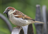 The detailed sparrow