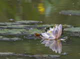 Spring Visit to Kenilworth Aquatic Gardens