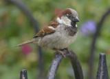 Sparrow haven