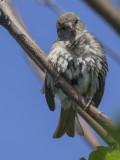Bird trials