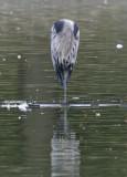 Headless heron?
