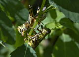 A grasshopper moment