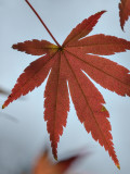 Detail on a red leaf