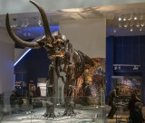 A more intimate view of the mastodon