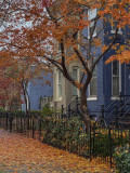 Fallen leaves and row houses