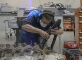 Vacuuming the dinosaur