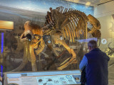 The distracted woolly mammoth