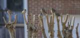 Sparrow confab