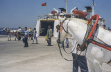 Çanakkale car (and horse) ferry to Gallipoli