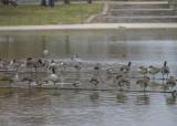One-legged gathering
