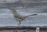 Perky bird on a garage
