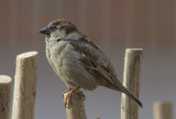 Sparrow and a red brick garage