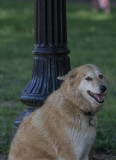Sahraa and a story about Kuwaiti dogs