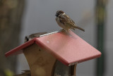 Sparrow distancing