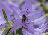 The obliging bee