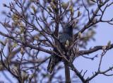 Twilight starling
