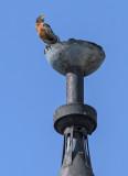 Turret watchbird