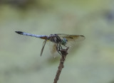 Dragonfly with a good sense of background