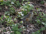 The (only) Arboretum bird