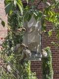 Romance at the bird feeder?