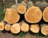 Oak logs.jpeg