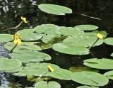 aquatic_plants