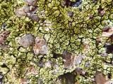 Lichen Covered Rock Detail