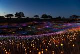 Sensorio light show at Paso Robles