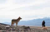 Klaas-&-Coyote-6553.jpg