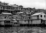 Seen from a boat, Manaus area.