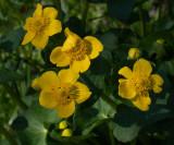 European wildflowers