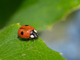 Beetles and Ladybirds
