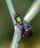 Flies and gnats a.o.