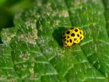 Beetles and Ladybirds