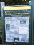 Kiwi recovery program