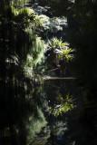 bush reflections