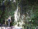 Fern cliff