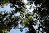 Pristine canopy