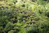 Te Urewera bush