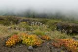 Saddle Mountain flora