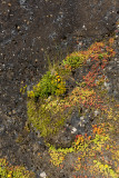 Succulents and basalt
