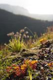 Backlit succulents
