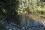 Big Creek Campground cooloff