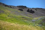 Flower meadows near the pass