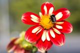 Bumble bee helipad
