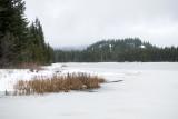 Foggy Trillium Lake