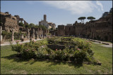 From Forum Romanum, cloisters of the Vestal Virgins...