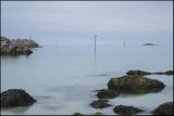 Seagull on a pole.....