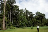 Birds of paradise frequent Klub Golf Rimba Irian